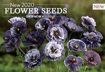 Shop New Flower Seeds