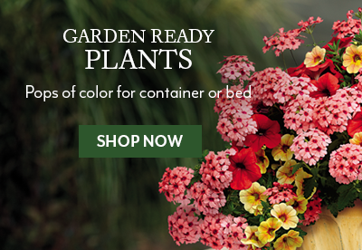 Garden Ready Plants