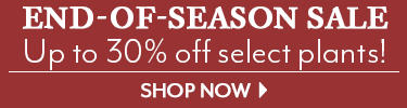 End-of-Season Sale