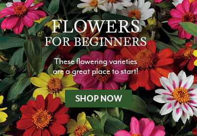Flowers for Beginners