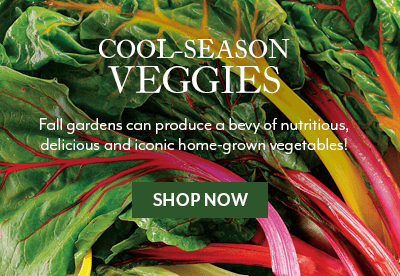 Cool-Season Veggies
