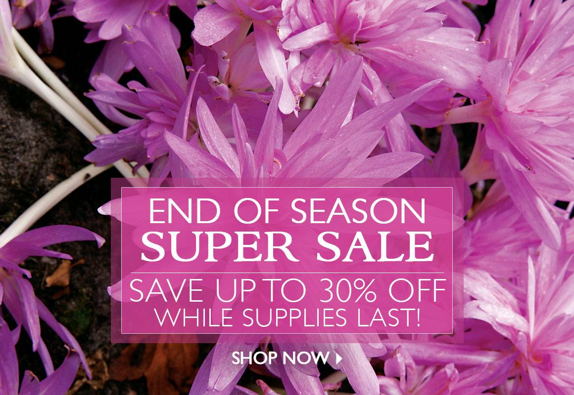 End of Season Super Sale- Save up to 30% off over 100 Items!