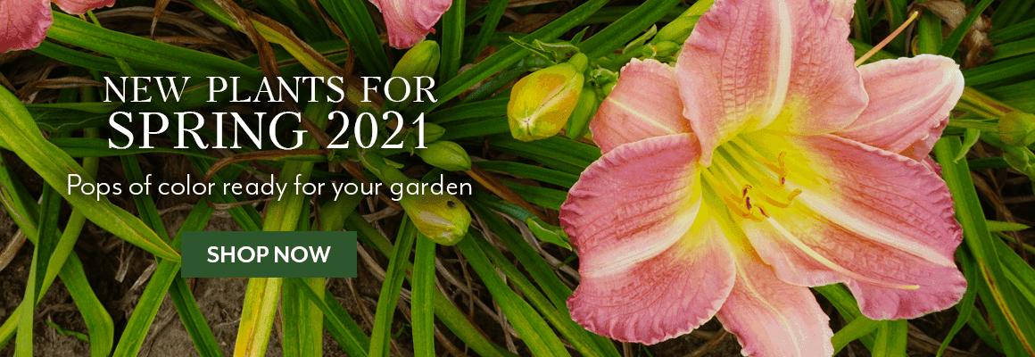 New 2021 Plants
