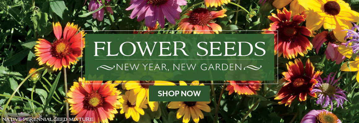 FLOWER SEEDS NEW YEAR, NEW GARDEN