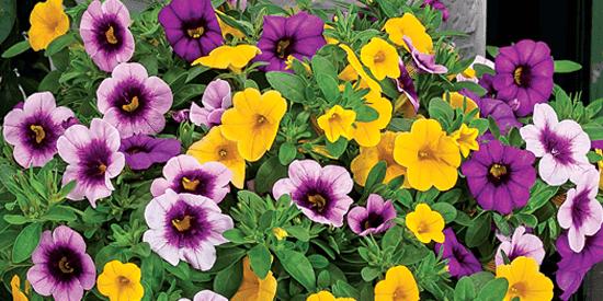 Garden Ready Annuals