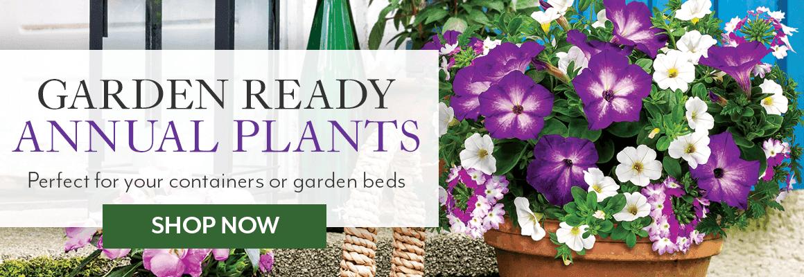 Garden Ready Annual Plants