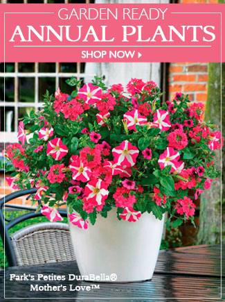 Shop Garden Ready Annuals