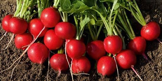 New Organic & Heirloom
