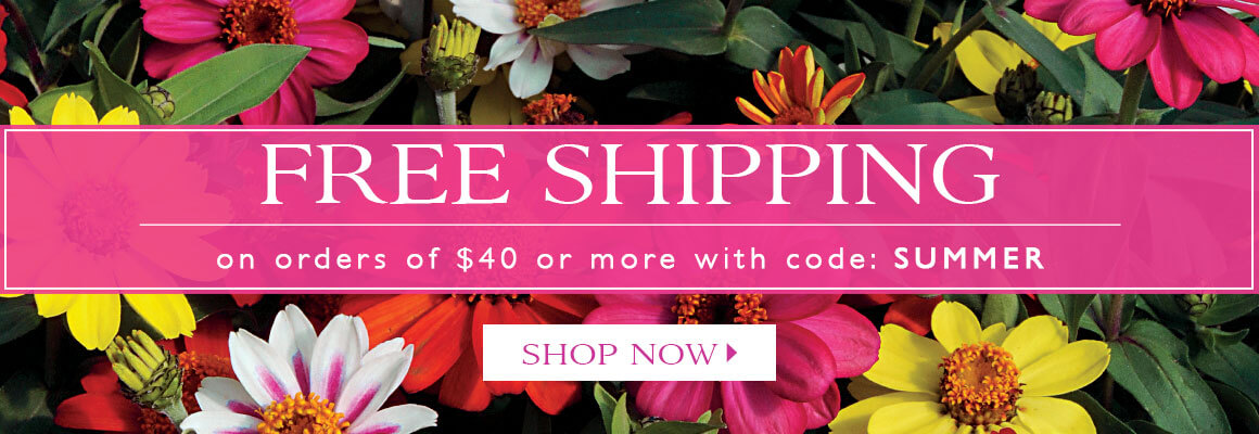 Free Shipping on orders of $40 or more with code SUMMER