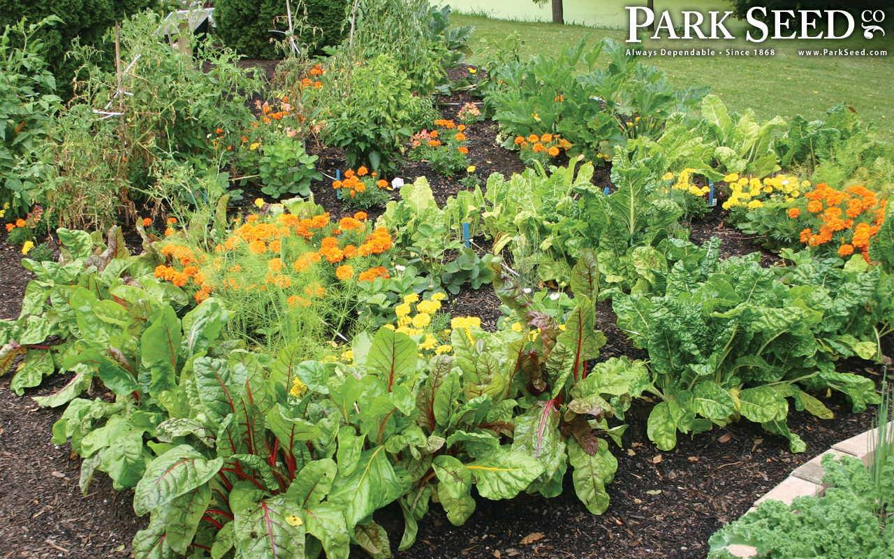 Park Seed is a one stop shopping source for all types of gardening and seeds needs. Customers can request a free newsletter as well as a free catalog through its official website.
