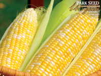 Corn Mirai Bicolor