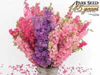 Organic Larkspur Lovers Mix