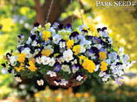 Pansy Cool Wave™ Mix