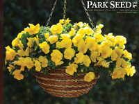 Pansy Cool Wave™ Yellow