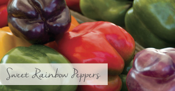 Sweet Rainbow Peppers