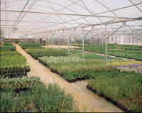 Park Seed Greenhouse