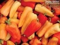 Pepper 'Chablis'