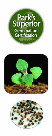 Nepeta Seed Germination