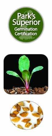 Oenothera Seed Germination