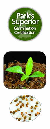 Penstemon Seed Germination