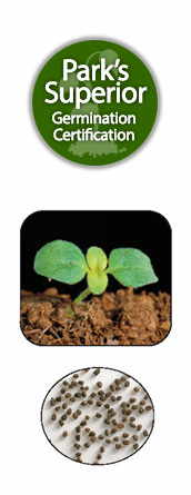 Antirrhinum Seed Germination