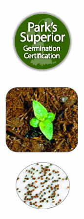 Pentas Seed Germination