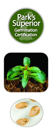 Punica Seed Germination