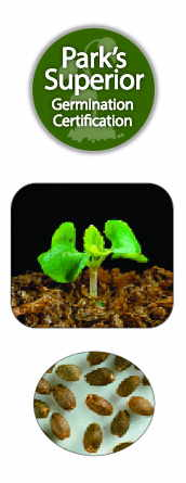 Salvia Seed Germination