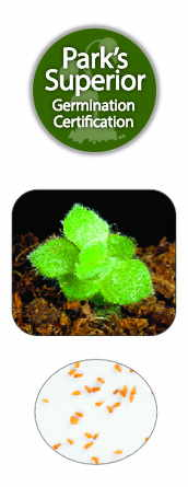 Sempervivum Seed Germination