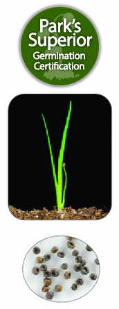 Sisyrinchium Seed Germination