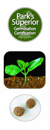 Thunbergia Seed Germination