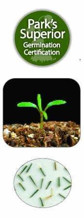 Thymophylla Seed Germination