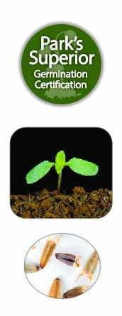 Tithonia Seed Germination
