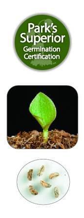 Tradescantia Seed Germination