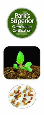 Verbena Seed Germination