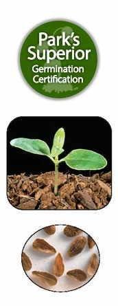 Asclepias tuberosa Seed Germination