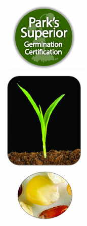 Viola Seed Germination