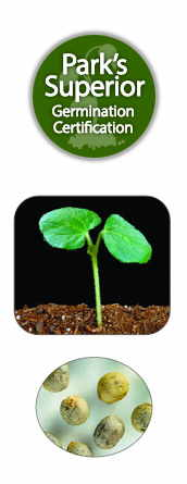 Okra Seed Germination