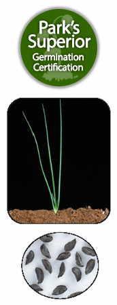 Chives Seed Germination