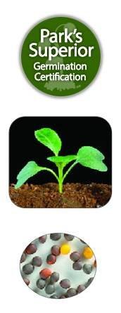 Mustard Seed Germination