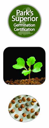 Cabbage Seed Germination