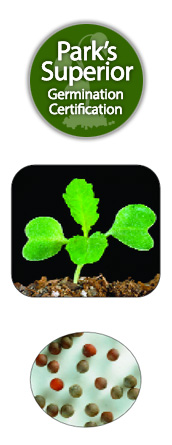 Turnip Seed Germination