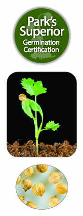 Coriander Seed Germination