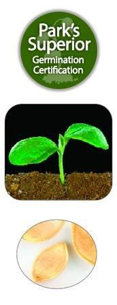 Squash/Zucchini Seed Germination