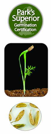 Fennel Seed Germination