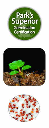 Strawberry Seed Germination