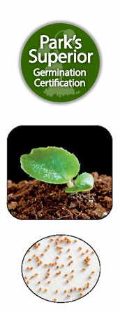 Begonia Seed Germination
