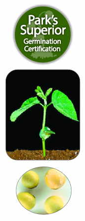 Soybean Seed Germination