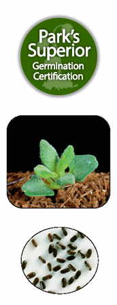 Lavender Seed Germination