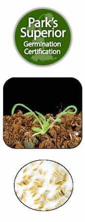 Chamomile Seed Germination